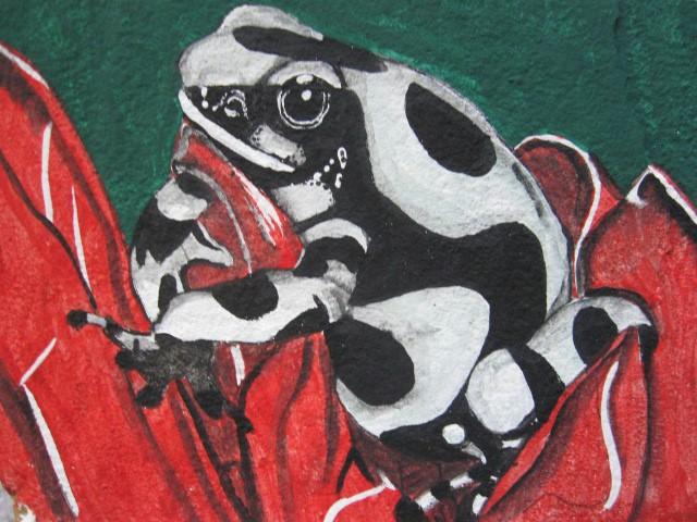 Blk ./Wht. Dart Frog