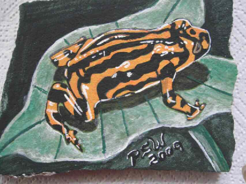 Orange /Blk. Tree Frog