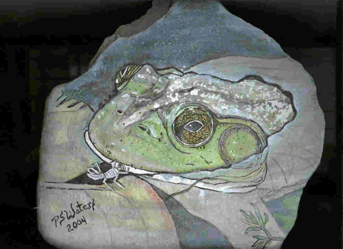 King of the Pond-Bullfrog